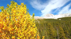Banff National Park Fall Colors - stock footage