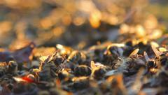 Dead bees on the ground Stock Footage