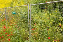 Klaprozen en koolzaad achter een hek Stock Photos