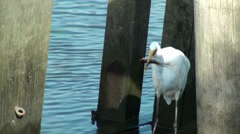 Egret eating a fish Stock Footage