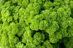 closeup of parsley - stock photo