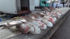 Lot of dead sharks in Dubai fish market - shark finning Stock Footage