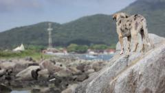 dog on a rock on beautiful landscape - stock footage