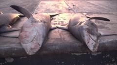 Dead sharks in Dubai fish market - shark finning Stock Footage