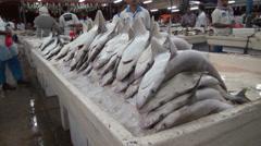 Pile of dead baby sharks - Dubai fish market, shark finning Stock Footage