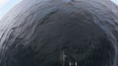 Dolphins swimming front of boat - view from the boat Stock Footage