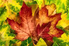 Vivid autumn leaves arrangement Stock Photos
