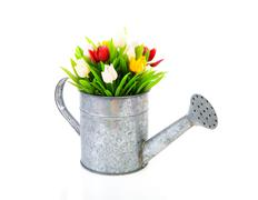 Zinc watering can with colorful tulips Stock Photos