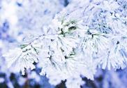 Stock Photo of winter background