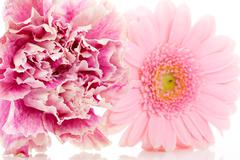 Stock Photo of pink carnation and gerber flowers