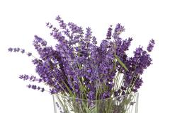 bouquet of picked lavender - stock photo