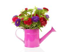 colorful asters flowers in pink watering can - stock photo
