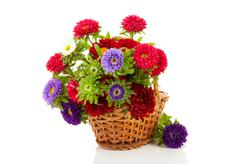 colorful asters flowers in cane basket - stock photo
