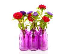 colorful asters flowers in vase - stock photo