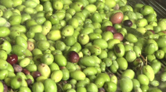 Green olives at olive mill. Stock Footage