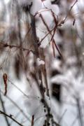 first snowfall - stock photo