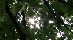 Sunlight filtering through green leaves Stock Footage
