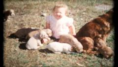 Baby and the puppies get to know each other, 503 vintage film home movie Stock Footage