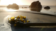 Kelp Stipe Stock Footage