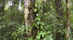 Tracking down an epiphyte covered tree trunk in Amazonian Rainforest in Ecuador. Stock Footage