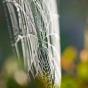 Hämähäkinverkko (seitti) lähikuva tausta. Kuvituskuvat