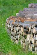 spruce timber logging in forest, poland - stock photo