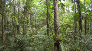 Stock Video Footage of Flying through Amazonian rainforest in Ecuador