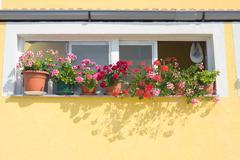 Window with flowers, dalmatia, zadar, croatia Stock Photos