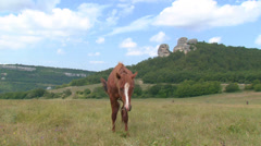 Horse in a pasture in the valley Stock Footage