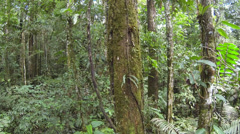 Tracking down a mossy tree trunk  in Amazonian rainforest, Ecuador. Stock Footage