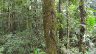Stock Video Footage of Tracking down a mossy tree trunk  in Amazonian rainforest, Ecuador.