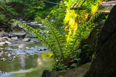Beautyful leaf of fern (cyathea lepifera) are regular array. Stock Photos