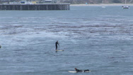 Stock Video Footage of Surfers in Santa Cruz