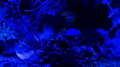 Coral reef aquarium nightlife with blue illumination Stock Footage