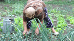 Peasant woman take care off vegetable garden Stock Footage