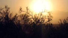 Stock Video Footage of Desert Brush Silohuette against Hazy Sunset