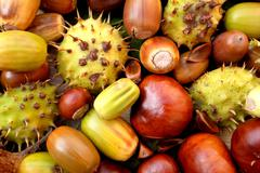 Acorns, conkers, horse chestnut cases and beechnuts Stock Photos