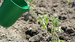Young plant irrigate with green bowl Stock Footage