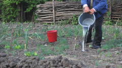 Farmer irrigate with pail the plants from the vegetable garden Stock Footage