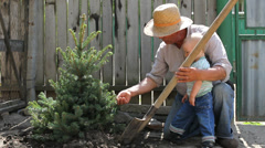 Lovely scenery, grandfather and grandson plant together a fir tree - stock footage