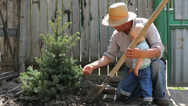 Stock Video Footage of Lovely scenery, grandfather and grandson plant together a fir tree