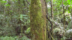 Tracking up a mossy tree trunk and liana in Amazonian rainforest, Ecuador Stock Footage