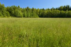 Green meadow and blue sky Stock Photos