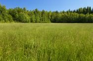 Stock Photo of green meadow and blue sky