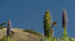 Monarch Butterflies and Bees Stock Footage
