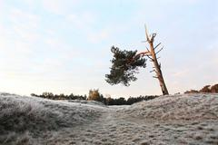 lonely tree with one branch in landscape with rime - stock photo