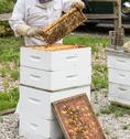 Stock Photo of Beekeeper
