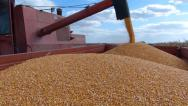 Stock Video Footage of Corn harvest, Combine in action