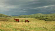 Stock Video Footage of Horses graze in a pasture