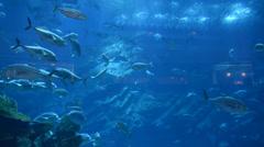 Ray and fishes in the aquarium of Dubai Mall, Dubai, UAE - stock footage